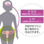 卵胞刺激ホルモン FSH